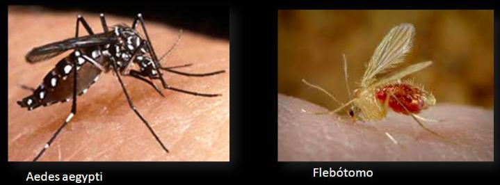 Comparativa contra mosquito del Dengue(Aedes Aegyptis)